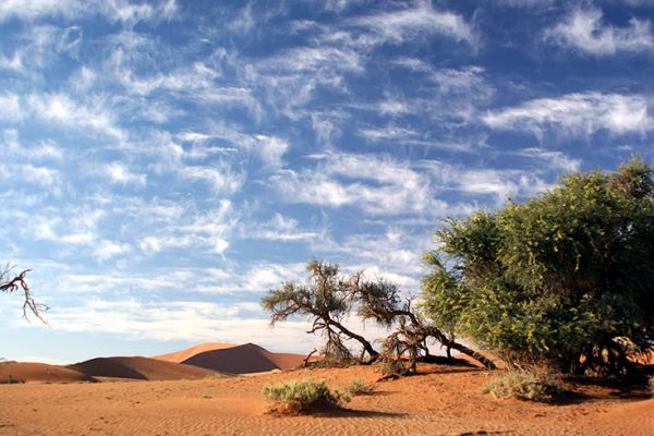 Highlights of Namibia (Deluxe)