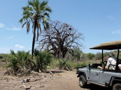 The Outpost - Game Drive