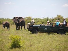 Ngala Private Game Reserve - Game Drive