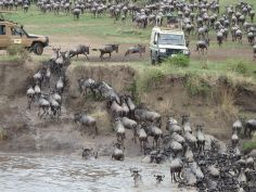Serengeti - River Crossing
